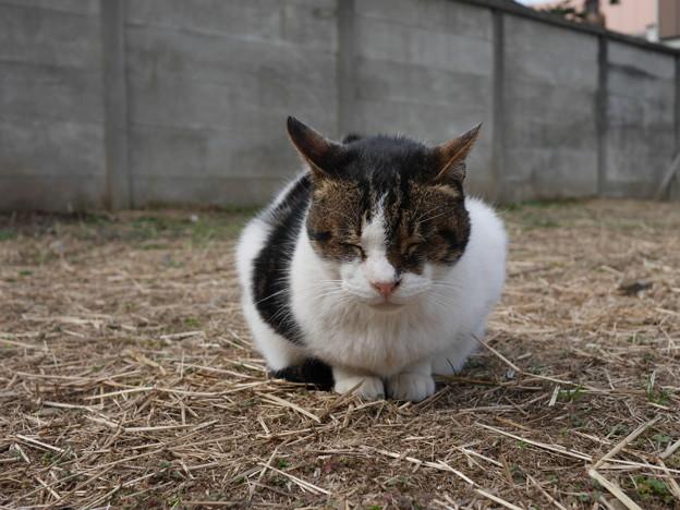 Photos: 外猫おっと