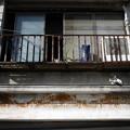 Photos: 猫がいる家