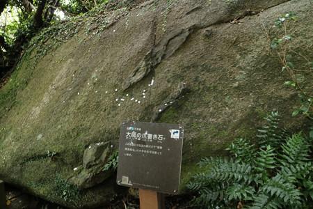 足摺岬 (8)