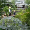 写真: 倉敷のあじさい