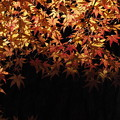 Photos: 岡山後楽園の紅葉