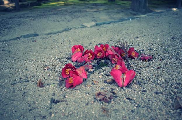写真: 終活