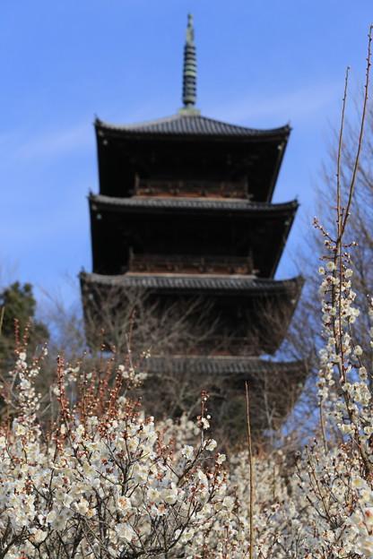 写真: 塔と梅