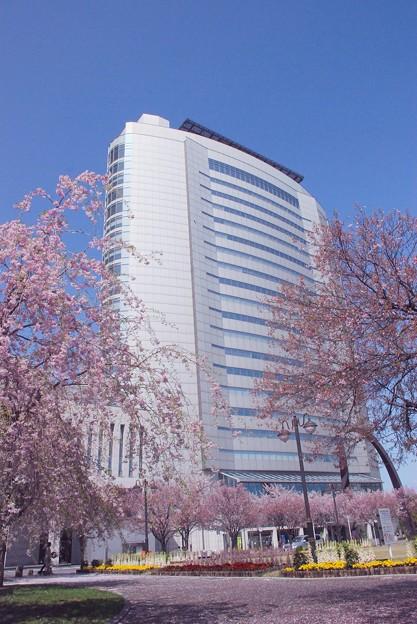 この年の市庁舎は桜花に包まれて-1-D8-0413-86