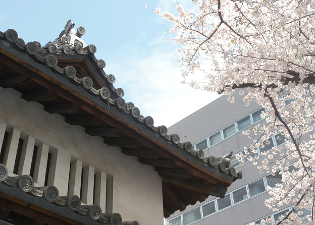 高崎城址・乾櫓東脇の瓦屋根と桜が見頃かな-P6-0410-31
