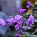 Photos: 家の花。