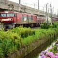 紫陽花と金太郎コンテナ貨物