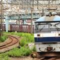 桃太郎165号機牽引高速貨物71レ浜川崎通過