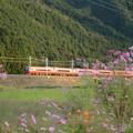 山裾の秋桜と赤い特急
