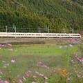 秋桜咲く山裾を行くスペーシア