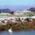 写真: 雪化粧の日光連山を望む