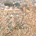写真: 鹿沼富士山公園の梅園