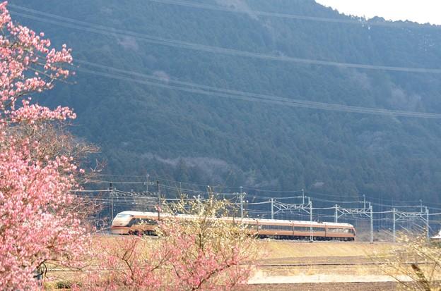 梅咲く山里を行く日光詣スペーシア