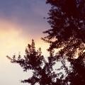 葉模様 木