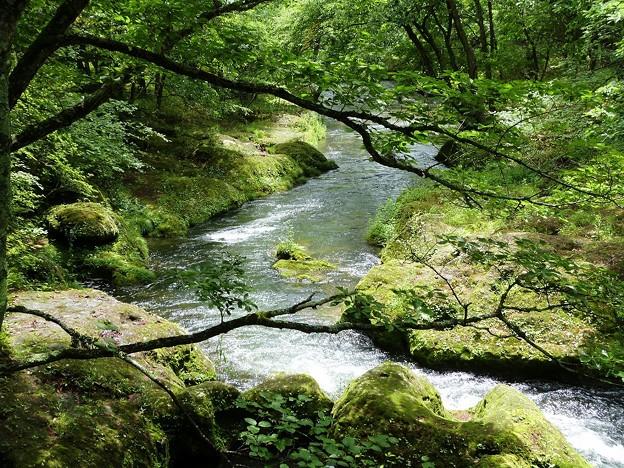 12-140719_湯川の流れ(石楠花橋上)