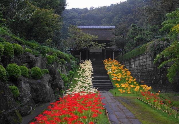 rs-160924_10_参道から山門を・SH(西方寺) (1)