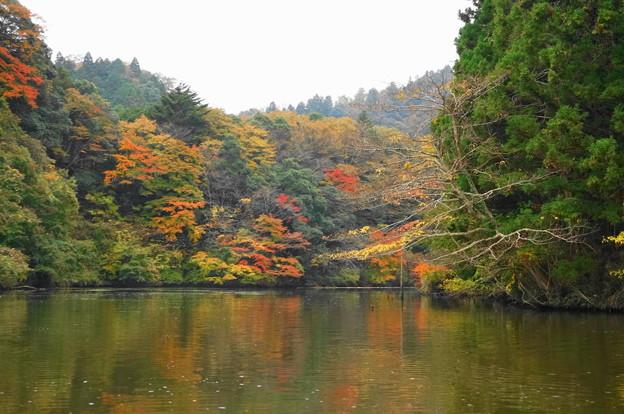 rs-161127_21_亀山湖の紅葉・SH(亀山湖クルーズ) (27)
