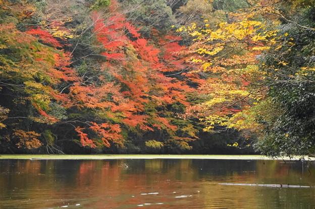 rs-161127_21_亀山湖の紅葉・SH(亀山湖クルーズ) (55)