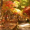 rs-161129_08_散策路の様子・仏殿まで・SH(平林寺) (31)