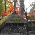 rs-161129_09_小屋と紅葉・SH(平林寺) (2)