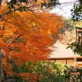 rs-161129_10_仏殿付近の紅葉・SH(平林寺) (12)