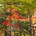 rs-161129_11_放生池付近の紅葉・SH(平林寺) (51)