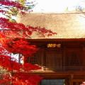 rs-161129_52_山門と紅葉(平林寺) (3)
