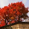 Photos: rs-161130_08_日本庭園の紅葉・SH(等々力渓谷) (8)