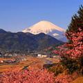 rs-170213_41_河津桜と富士山・SL(松田山) (4)