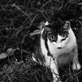 Photos: 流離猫