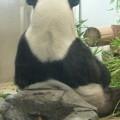 Photos: リーリー@パンダ 上野動物園
