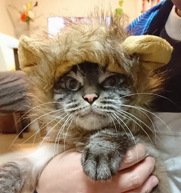 ライオンに