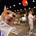 Photos: 木曽のニャ~♪ 中乗りさ~ん♪
