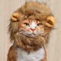 写真: ライオンみいこ