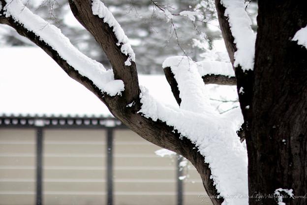 写真: 京都御所-0198