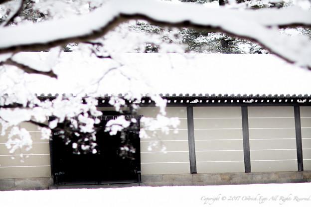 京都御所-0199