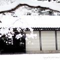 写真: 京都御所-0199