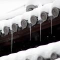 写真: 京都御所-0200