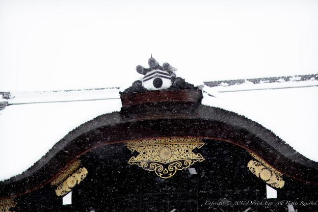 写真: 京都御所-0204