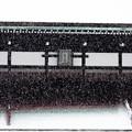 写真: 京都御所-0207