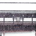 写真: 京都御所-0208