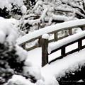 写真: 京都御所-0218