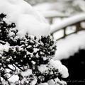 写真: 京都御所-0219