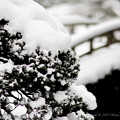 Photos: 京都御所-0219