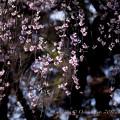 photo-2301