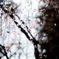 photo-2304