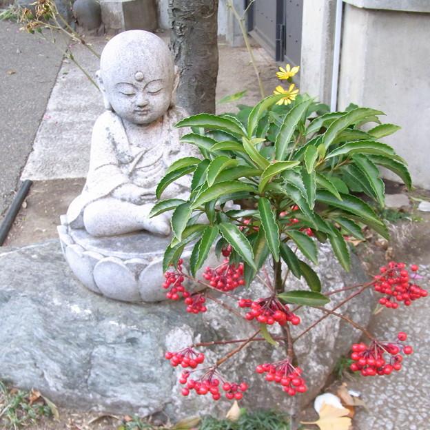 【東京|神社仏閣】 大円寺 (35)