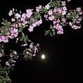 Photos: [Spring] 2011 桜