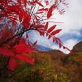 ナナカマドと焼岳山頂
