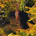 Photos: 森の水鏡